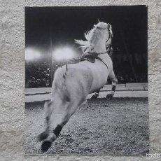 Fotografía antigua: SALTO DE CABALLO BLANCO/ GALOPE -- 50 X 60 CM -- CIRCO -- HOLANDA, 1966 -- CON SELLO DE COPYRIGHT --. Lote 57326169