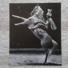 Fotografía antigua: CORCEL BLANCO CON AMAZONA - A DOS PATAS - 50 X 60 CM - CIRCO - HOLANDA, 1966 - SELLO DE COPYRIGHT. Lote 57326564