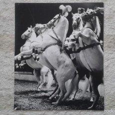 Fotografía antigua: PERFIL CABALLOS BLANCOS A DOS PATAS - 50 X 60 CM - CIRCO - HOLANDA, 1966 - CON SELLO DE COPYRIGHT. Lote 57326644