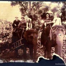 Fotografía antigua: FOTOGRAFÍA ELEFANTES INDIOS INDIA COLONOS COLONIAL PPIO S XX 21X29CMS. Lote 58478990