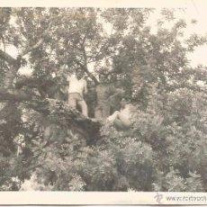 Fotografía antigua: ** SS729 - FOTOGRAFIA - TRES AMIGOS EN UN ARBOL - RF.C00. Lote 63029908