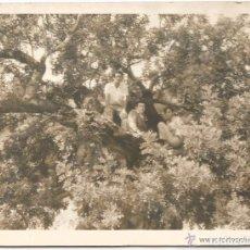 Fotografía antigua: ** SS749 - FOTOGRAFIA - TRES AMIGOS EN UN ARBÓL - RF.C00. Lote 63142820