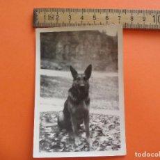 Fotografía antigua: ANTIGUA FOTOGRAFÍA ALEMANIA AÑOS 30-40. PERRO. SCHRO. FOTO.GERMANY PHOTO ANTIQUE. Lote 92990450