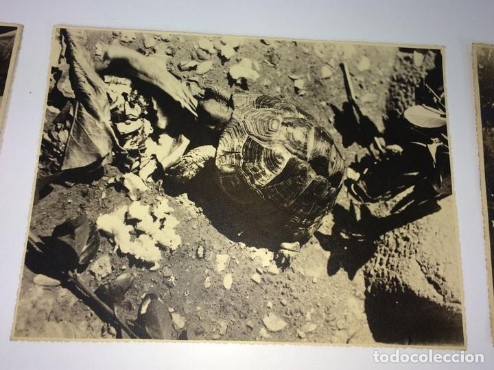 Fotografía antigua: ESCENAS CAMPESINAS. LOTE DE 10 FOTOGRAFÍAS. AUTOR ANÓNIMO. ESPAÑA. ENTRE 1920-35 - Foto 3 - 94391010