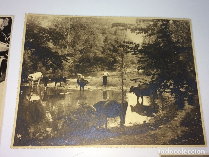 Fotografía antigua: ESCENAS CAMPESINAS. LOTE DE 10 FOTOGRAFÍAS. AUTOR ANÓNIMO. ESPAÑA. ENTRE 1920-35 - Foto 7 - 94391010