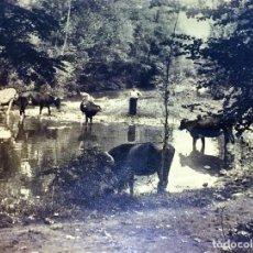 Fotografía antigua: FONT MOIXONA-OLOT. FOTOGRAFIA. FIRMADO PERE ELIES BUSQUETS. ESPAÑA. 1927. Lote 94582623
