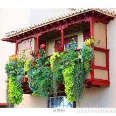 Old photograph - La Palma-Balcones-Foto Oleo - 105380071