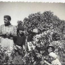 Fotografía antigua: FOTO TRABAJANDO EN EL CAMPO AÑOS 50. Lote 105798851