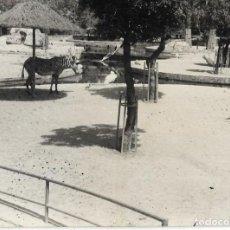 Photographie ancienne: == F431 - FOTOGRAFIA - ANIMALES EN UN ZOO. Lote 119714847