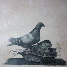 Fotografía antigua: J. THOMAS. 1896. INSTANTANEA. COLOMBOFILIA. Lote 120606163