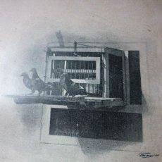 Fotografía antigua: AÑO 1896 PICHONES TOMANDO VISTAS EN LA JAULA AUTOMÁTICA. Lote 122146783