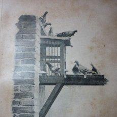 Fotografía antigua: AÑO 1896 PALOMAS MENSAJERAS ENTRANDO EN EL PALOMAR AL REGRESO DE UN VIAJE. Lote 122146835