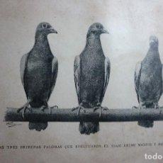 Fotografía antigua: AÑO 1896 LAS TRES PRIMERAS PALOMAS QUE EFECTUARON EL VIAJE ENTRE MADRID Y BARCELONA. Lote 122147031