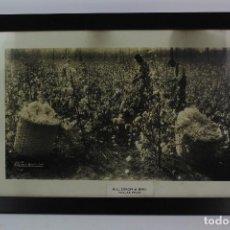 Fotografía antigua: FOTOGRAFIA CAMPOS DE ALGODON. R. L. DIXON & BRO. DALLAS , TEXAS. 1926. ENMARCADA CON CRISTAL.. Lote 128540283