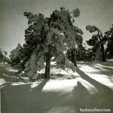 Fotografía antigua: NIEVE Y SOL EN NAVACERRADA. 1933. FOTÓGRAFO: J. DELGADO ÚBEDA.. Lote 130357446
