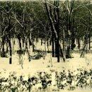 Fotografía antigua: MADRID. UNA VISTA DEL RETIRO NEVADO. DÉCADA DE 1930. FOTO SALAZAR. TAMAÑO 12,5X18 CM.. Lote 132282686