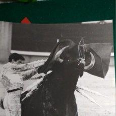 Fotografía antigua: FOTOGRAFIA TORERO PARRITA FIRMADA Y DEDICADA POR FOTOGRAFO LUIS VIDAL 23,5X30 CM VER FOTOS. Lote 146458698