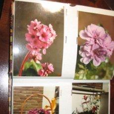 Fotografía antigua: 200 FOTOGRAFIAS DE FLORES Y JARDINES EN ALBUM. Lote 150509106