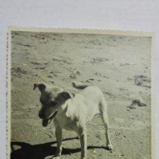 Fotografía antigua: FOTOGRAFIA, PERRITO EN LA PLAYA, AÑO 1955, MEDIDAS 17,5 X 12 CM. Lote 152382618