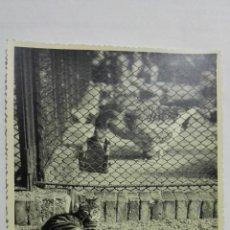 Fotografía antigua: FOTOGRAFIA, GATO TUMBADO Y OCA COMIENDO, AÑO 1955, MEDIDAS 17,5 X 12 CM. Lote 152382750