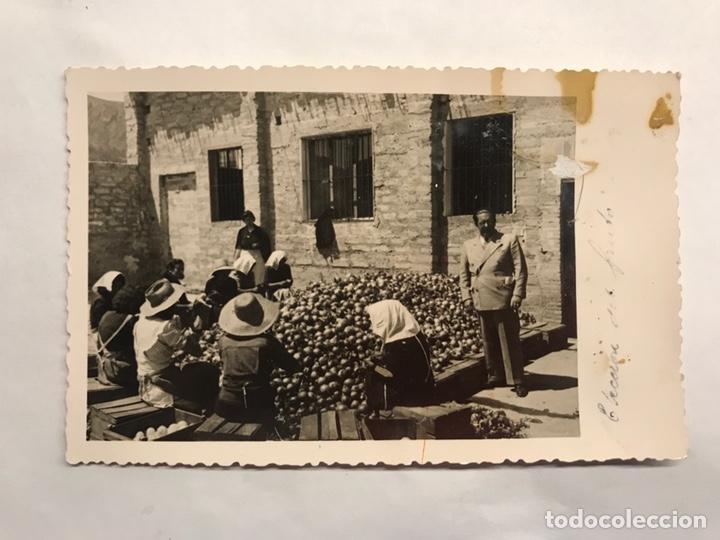 FOTOGRAFÍA ANTIGUA. GRUPO DE MUJERES AL SOL. SELECCIONANDO FRUTAS (H.1950?) (Fotografía - Artística)