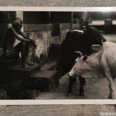 Fotografía antigua: FOTOGRAFÍA PROFESIONAL ARTÍSTICA BLANCO Y NEGRO- PAISAJE INDIA, 30'5X20CM.. Lote 162313964