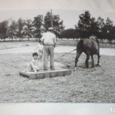 Fotografía antigua: FOTO AÑOS 50/60 EN LA ERA TRILLANDO. Lote 165732122