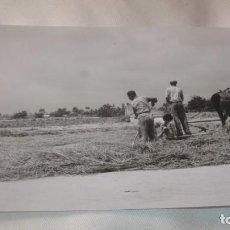 Fotografía antigua: FOTO AÑOS 50/60 TRILLANDO. Lote 165734726