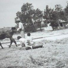 Fotografía antigua: FOTO AÑOS 50/60 EN LA ERA TRILLANDO. Lote 165735454