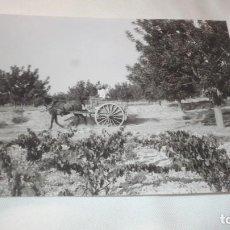 Fotografía antigua: FOTO AÑOS 50/60, CARRO CON MULO Y DUEÑO EN VIÑEDO. Lote 165765126