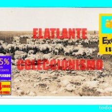 Fotografía antigua: MAJADA / REBAÑO DE ROMNEY MARSH EN ESTANCIA DEL URUGUAY - RARÍSIMA FOTOGRAFÍA AÑOS 20 - EXCELENTE. Lote 167028604