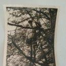 Fotografía antigua: FOTOGRAFÍA DE NIÑO ALEMÁN SUBIDO A UN ÁRBOL. AÑOS 40. Lote 167986054