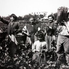 Fotografía antigua: RAMON VIDIELLA BALART - 1900 - LA VEREMA AL BAIX CAMP - FOTOGRAFIA - 31,5 CM X 43 CM.. Lote 172121254
