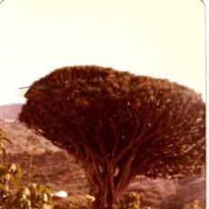 Fotografía antigua: == NA820 - FOTOGRAFIA - DOS AMIGAS DELANTE DE UN ARBOL. Lote 173417237
