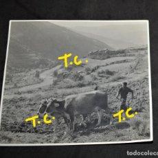 Fotografía antigua: ANTIGUA FOTOGRAFIA ARANDO EN EL CAMPO AÑO - 1946. Lote 179333183