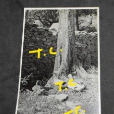 Fotografía antigua: ANTIGUA FOTOGRAFIA OCAS AÑO - 1944. Lote 179333465