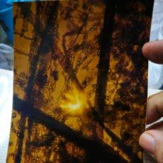 Fotografía antigua: FOTOGRAFIA ARTÍSTICA. Lote 180447518