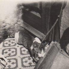 Fotografía antigua: FOTOGRAFIA FOTO ARTISTICA DE UN GATO MANRESA 19 DE JULIO DE 1957. Lote 182951447