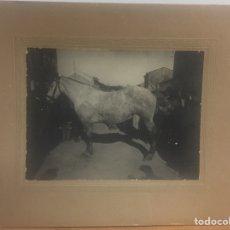 Fotografía antigua: FOTOGRAFÍA DE ACABALLO FIRMADA J.CABEDO. Lote 183736431