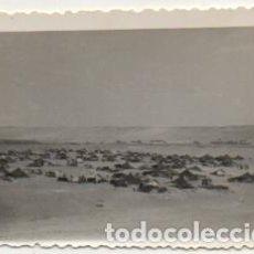 Fotografía antigua: FOTOGRAFIA DEL AAIUN. FOTO AVION. FRANCISCO GOMEZ FOTOGRAFO. 8X5,7 CM FOTSEV-908, 2. Lote 184091158