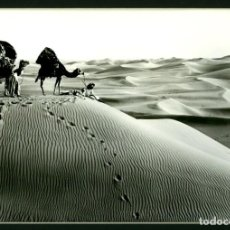 Fotografia antiga: LEHNERT & LANDROCK - CON CERTIFICADO - MONTADA SOBRE PASSEPARTOUT NEGRO - 50 X 40 / 33 X 23. Lote 193810142
