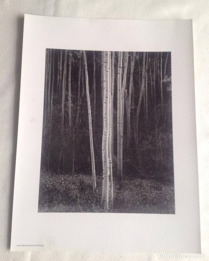 Fotografía antigua: REPRODUCCIONES FOTOGRAFÍAS ANSEL ADAMS DE LATINSTOCK/CORBIS Y W.E. SMITH/H.CARTIER DE MAGNUM PHOTOS - Foto 8 - 194231792
