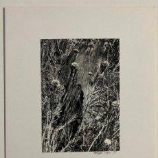 Fotografía antigua: FOTOGRAFA ORIGINAL DE MARSHALL COHEN . Lote 194266663