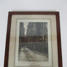 Fotografía antigua: ANTIGUA FOTOGRAFÍA FINLANDIA - COLUMNATA EN EL PALACIO BOSQUE CON CARRETERA - MARCO MADERA DE ROBLE. Lote 194310521