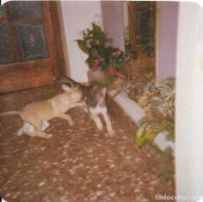 Fotografía antigua: == GG320 - FOTOGRAFIA - PERRITOS. Lote 195049810