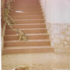 Fotografía antigua: == GG511 - FOTOGRAFIA - PERRITO EN UNA ESCALERA. Lote 195149306