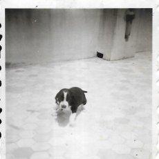 Fotografía antigua: == FP389 - FOTOGRAFIA PEQUEÑO FORMATO - PERRITO - 6 X 4,5 CM.. Lote 195337847