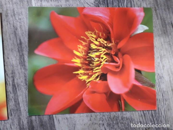 Fotografía antigua: Fotografías florales - Foto 5 - 195370461