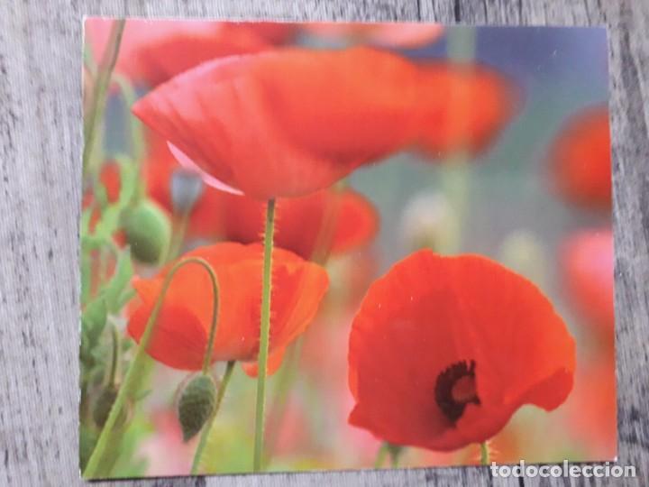 Fotografía antigua: Fotografías florales - Foto 7 - 195370461