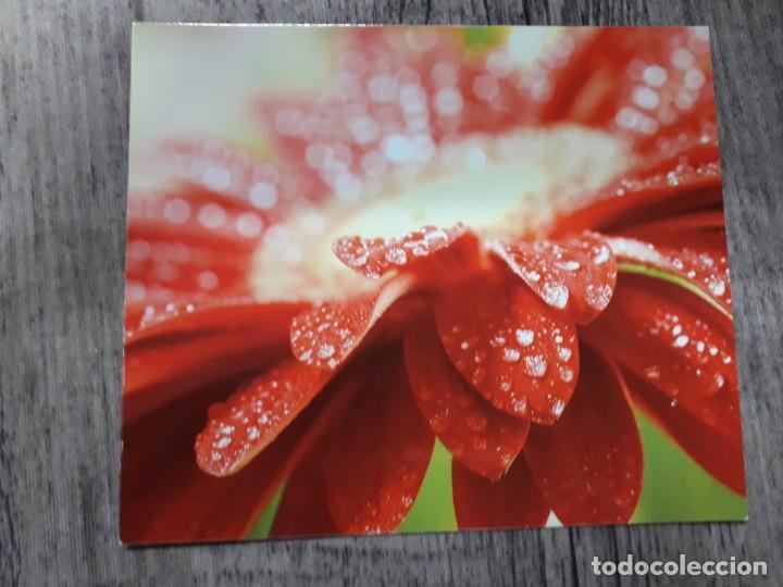 Fotografía antigua: Fotografías florales - Foto 8 - 195370461